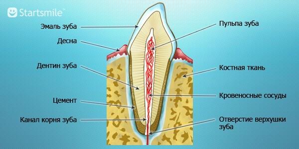 чистка сосудов от холестерина чесноком
