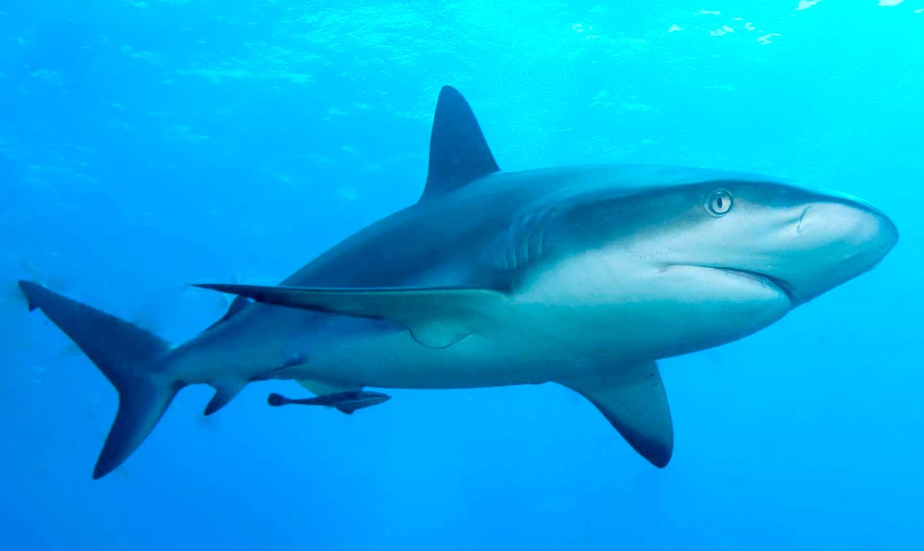 снимки акул