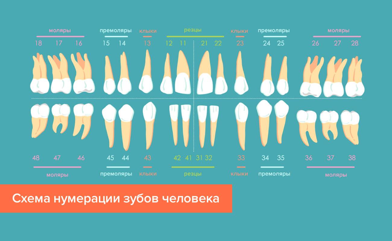 Схема нумерации зубов человека в картинках