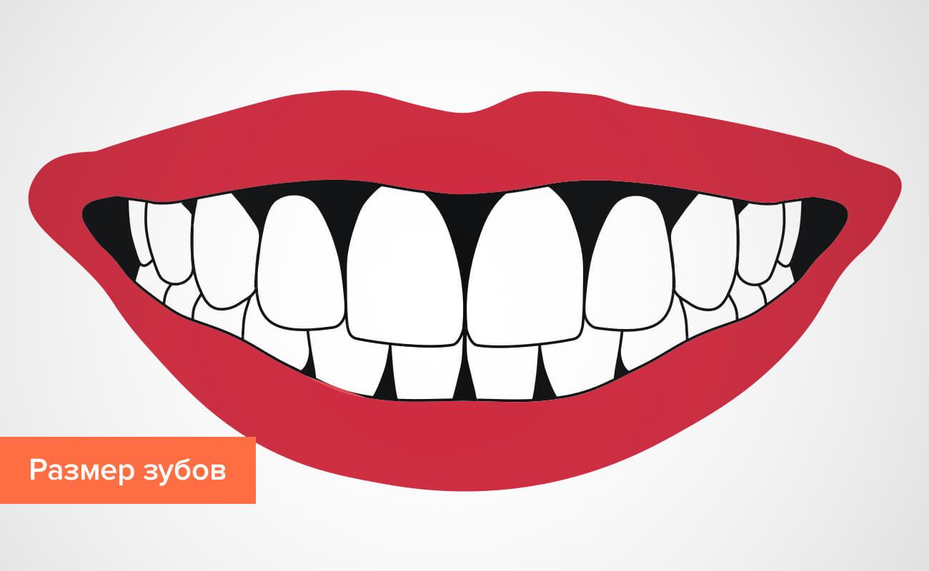 Размер зубов в картинках