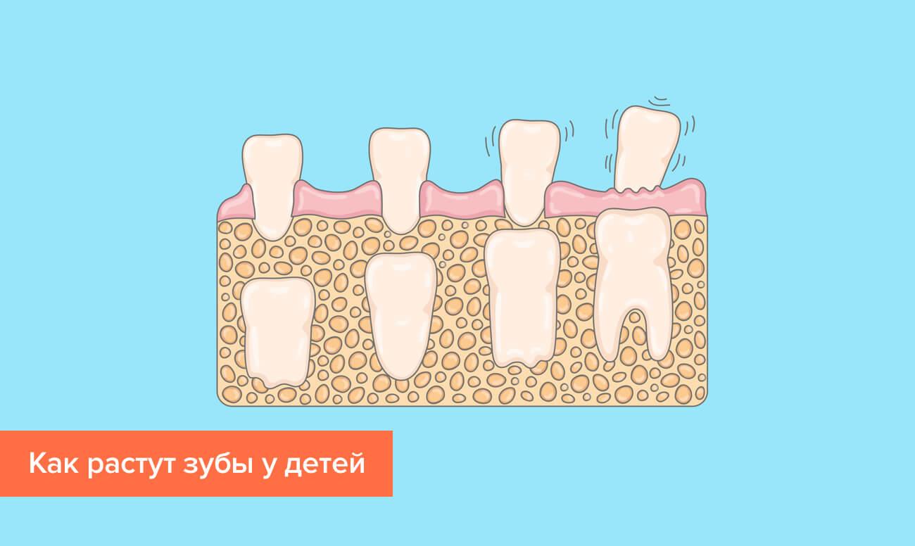 Процесс роста зубов у детей в картинках