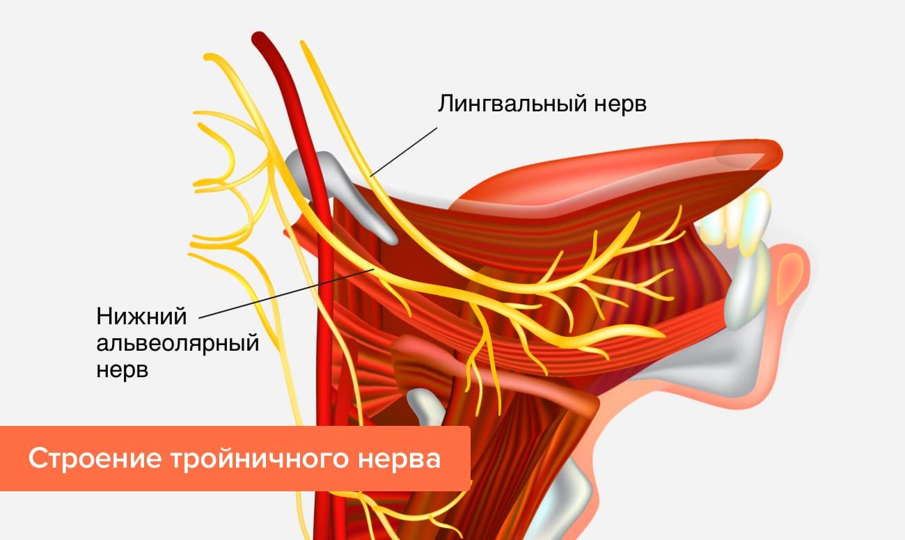 Строение тройничного нерва в картинках