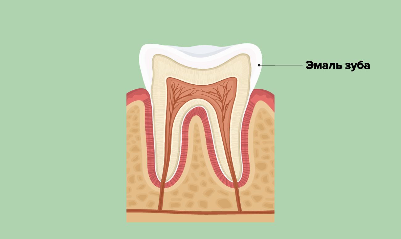 Эмаль зуба в картинках