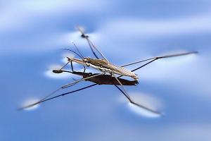 Челюсти насекомых помогают экологам