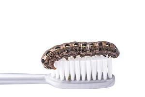 Миф о зубных червях