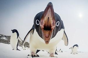 Зубы пингвинов
